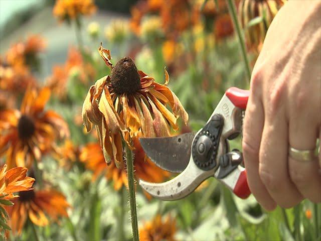 end of summer gardening