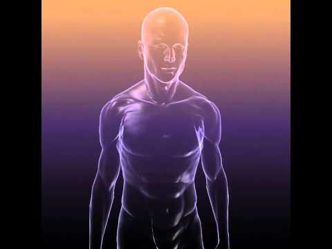 Human Body Anatomy 3d Model For Medical Vizualisation Youtube