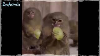 ПРИКОЛЫ С ЖИВОТНЫМИ   FUN WITH ANIMALS #571