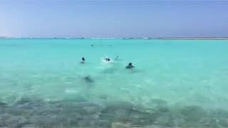 المصريين الأحرار يحتفل بتدريب 74 شابا على الغوص والإنقاذ في مطروح