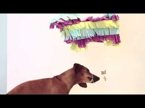 DIY Piñata for your Dog with Ammo the Dachshund