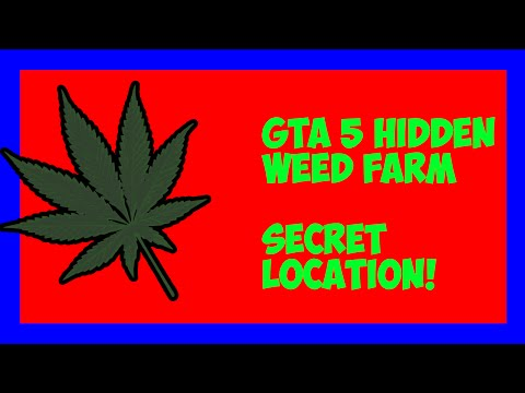 gta 5 how to buy a weed farm