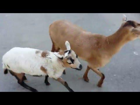 Зоопарк Одесса. Артемка гуляет  в одесском Зоопарке. Животные одесского зоопарка/Odessa zoo