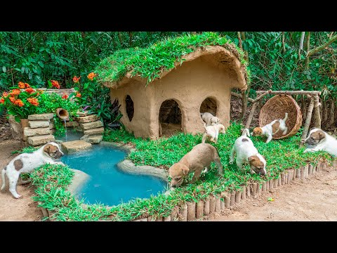 Rescue dog by Collect Abandoned Dog and Build Mud Dog House with Mini Water Fall Swimming Pool