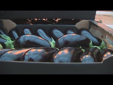 В Волгоградской области начали выращивать тепличные баклажаны