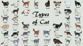 All 98 Types Of Cat In The World