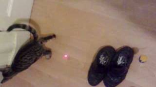 kitten gone wild playing with laser pen by $e7en check me out on ebay