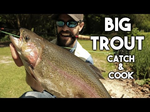 Catch and Cook BIG TROUT {GRAPHIC} GUT, CLEAN & FILLET | Cook on a STICK