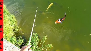 Catching KOI FISH in BACKYARD LAKE! **Hardest Fish to Hook between Catfish and Carp**