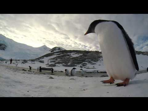 Antarctica 2014 - Neko Harbour GoPro Project