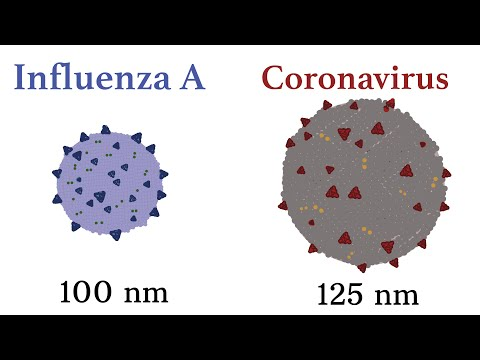 Difference Between The Flu and Coronavirus?