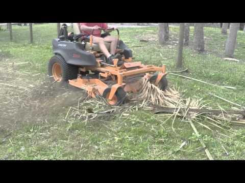 Big yard cleanup the fun way - Pine cone extravaganza!