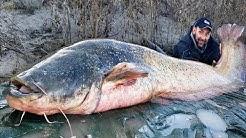 Pesca a Spinning al Siluro: Gigante da un quintale - HD by Catfishing World
