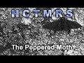 How Creationism Taught Me Real Science 69 The Peppered Moth