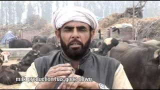 Mohamed Fakir (Dairy Farmer) - Raipur Gujra, Punjab India