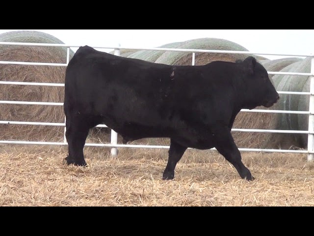 Express Ranches Lot 185