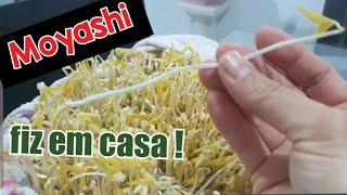 Aprenda a Cultivar em Casa o Broto de Feijão Moyashi