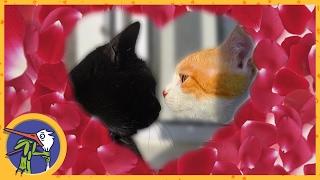 Рыжик и Китти отмечают день святого Валентина. Кошачий праздник - день всех влюбленных
