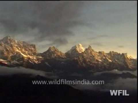 Wild India 24 hours Part 1