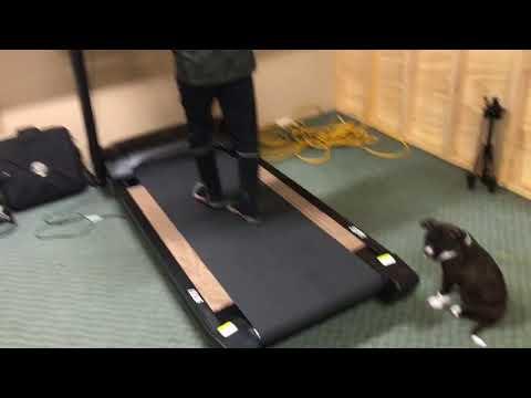 Commercial Treadmill Cognitive Gaming Application Swing Balance Vista Medical