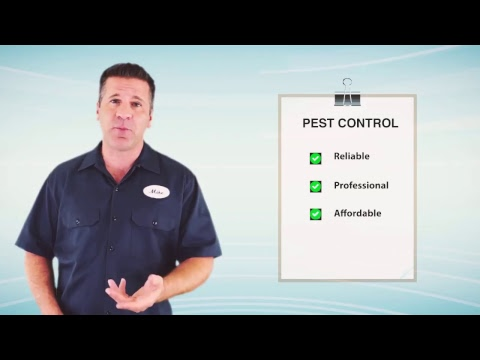 Emergency Pest Control Walla Walla
