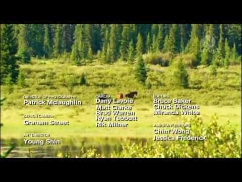 Вопрос: Диких лошадей в живой природе подковывают или нет и почему?