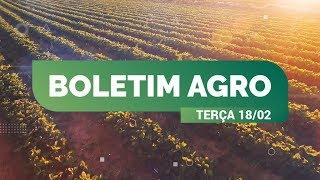 Boletim Agro - Chuva será bem distribuída no país esta semana