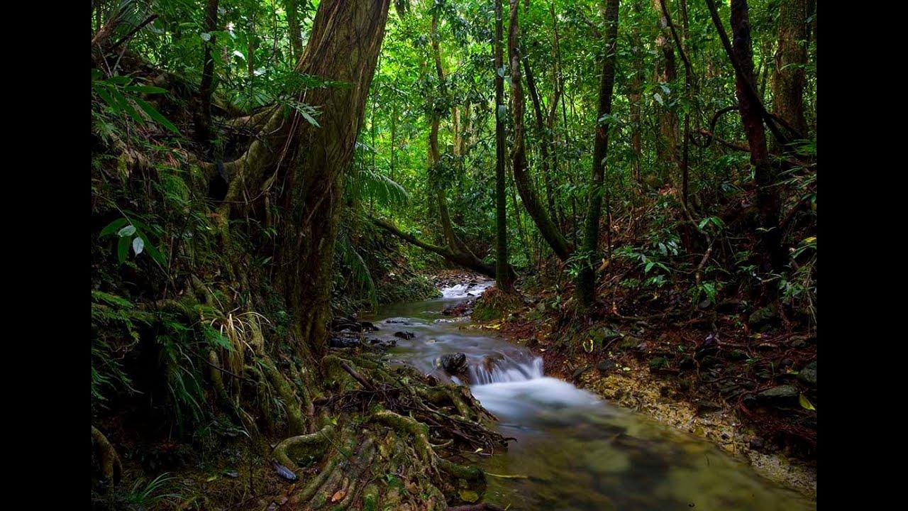 الغابات المطيرة Rain Forest Youtube