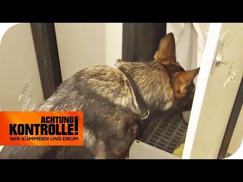 Drogenspürhund auf heißer Fährte: Ist hier etwas versteckt? | Achtung Kontrolle | kabel eins