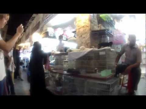 Souq Waqif Pet Shops - Doha, Qatar