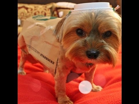 Starbucks cup dog costume easy diy youtube starbucks cup dog costume easy diy solutioingenieria Choice Image