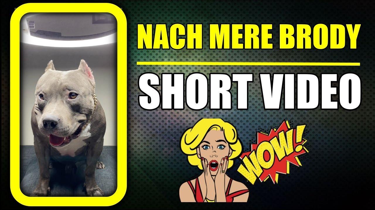 Download Nach meri Brody Laila 😁 Aa Gya hamara hero | Funny Dog #shorts Video | Harpreet SDC