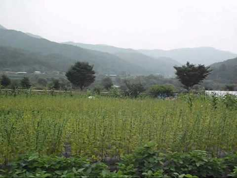 South Korea: Hahoe Folk Village, a must-see destination