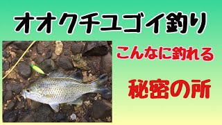 (久米島)ユゴイ釣り