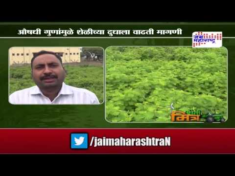 Sheti Mitra: Animals fodder increase