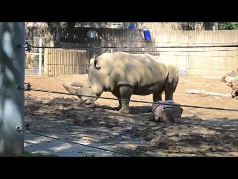 Memphis Zoo!