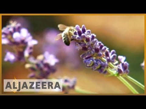 Ban on pesticides urged to save Britain's bees