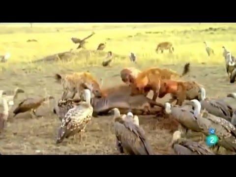 Documental Animal - (TANZANIA AFRICA SALVAJE)