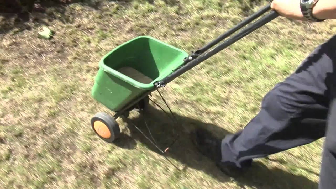 how to reseed a lawn, Natural flower