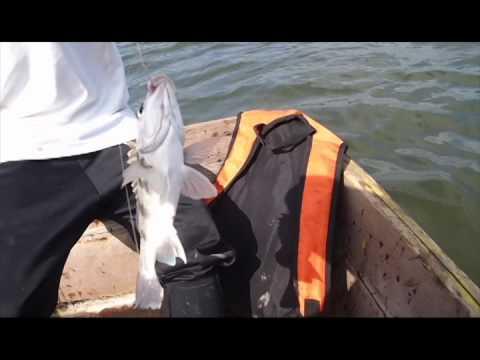 muisne pesca