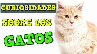 Curiosidades sobre los Gatos que no sabias