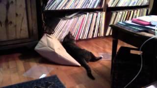 猫が3分間袋の中で温めていたものとは?