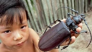 5 Biggest Insects in the World