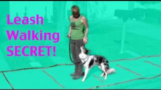 Teach your dog not to pull - teach 'back up' for leash walking