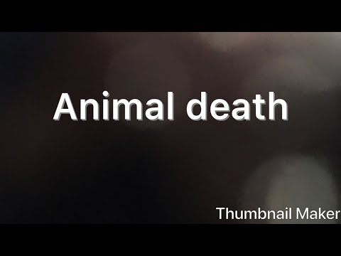 How to cope with animal death