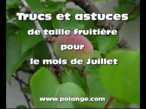 Comment tailler les arbres fruitier en juillet youtube - Comment tailler les arbres fruitiers ...
