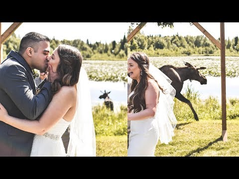 Moose Photobombs Couple's Wedding Ceremony During Vows