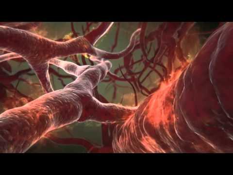 Demam Berdarah Dengue, Penyebab dan Cara Efektif untuk Mengatasinya - Herbal TV