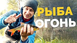 РЫБОЛОВНАЯ АВАНТЮРА В поисках карася Ловим на батон Рыбалка на поплавок Рыбалка 2021