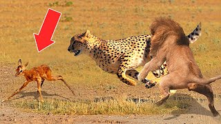 10 Times Predators SAVED Their Prey